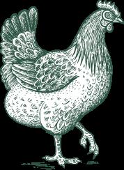 High Island Chick