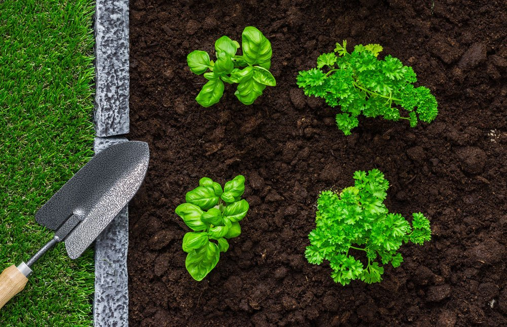 gardening and food production